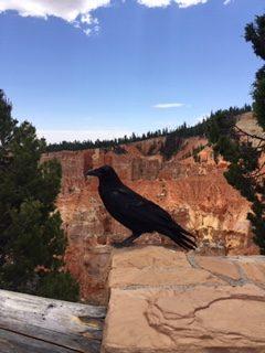 Bird looking over the rim